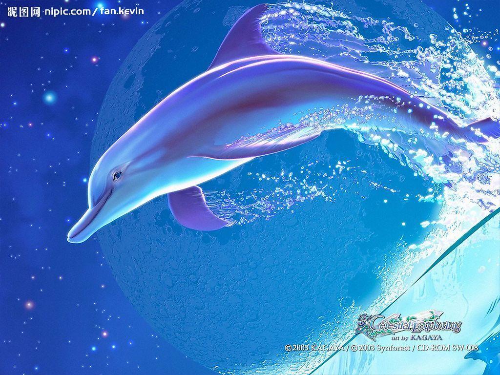 头像梦幻海豚